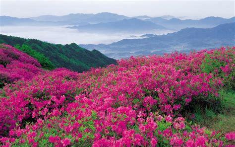 wallpaper flower valley explore valley of flowers national park of uttarakhand