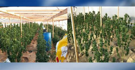San Bernardino County Warrant Search Search Warrants Lead To 3 000 Marijuana Plants Seized Victor Valley News Vvng