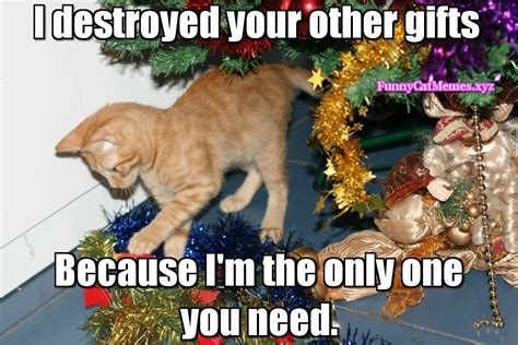 christmas cat memes 25 memes that will surely make you excited sayingimages