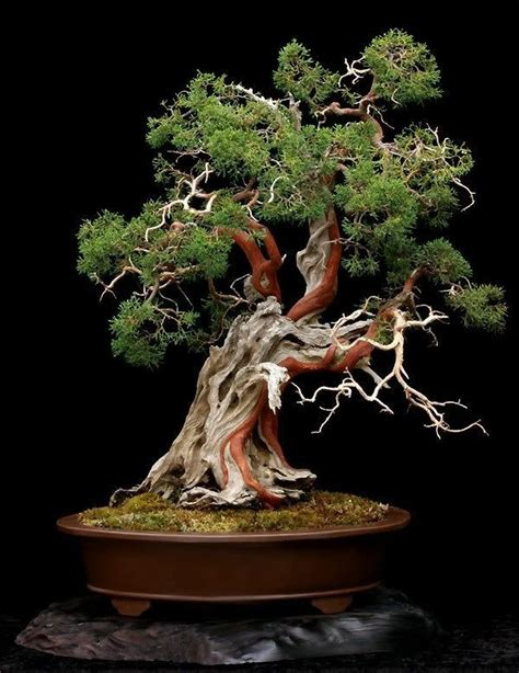 baum pflanzen best 20 bonsai baum ideas on bonsai pflanzen