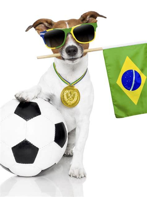 imagenes de animales juguetones fotos de perros graciosos 27 cachorros para com 233 rselos