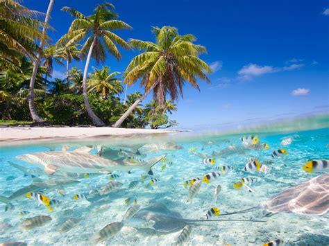 tropical scenery sea beach palm trees fish sharks