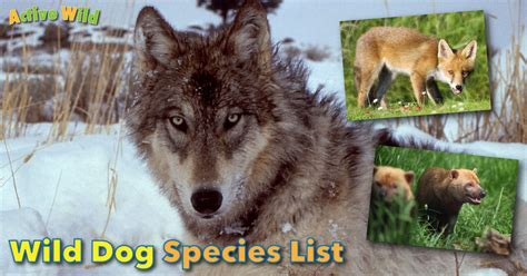 species canine species list with pictures types of dogs