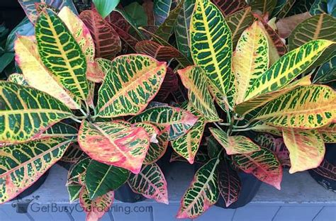 Tropical Plant Care - tropical houseplant care a guide to growing tropical plants indoors