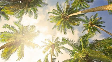 Palm Tree Wallpaper by Bright Palm Tree Hd Backgrounds Desktop Wallpapers