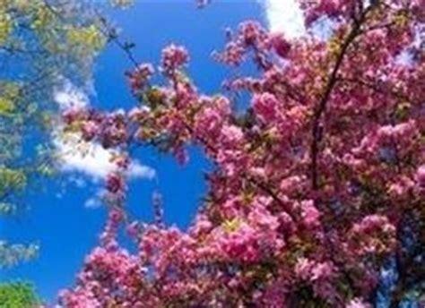 piante con fiori rosa fiori delle piante