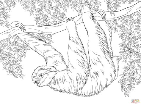 three toed sloth hanging on tree coloring page free