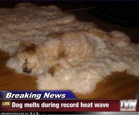 Funny Heat Memes - funny dog photos with humorous captions motley news