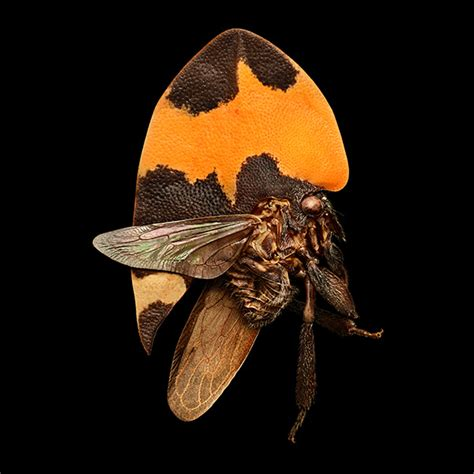 1419726951 microsculpture portrait of insects microsculpture the insect portraits of levon biss