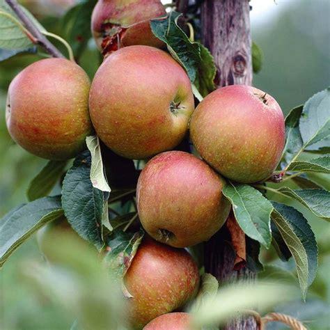 apple uttwiler spatlauber 45 best images about supernatural ingredients on pinterest