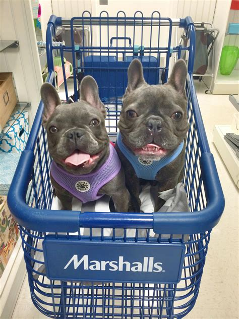 tj maxx dog beds 6 dog friendly stores that allow dogs