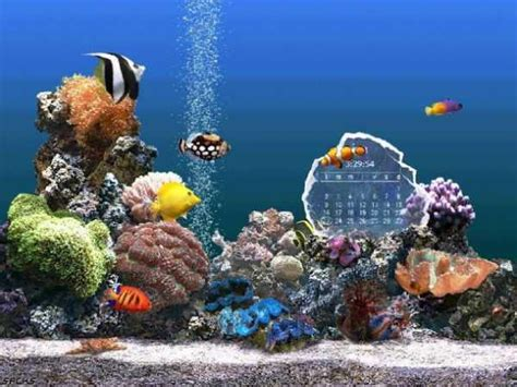 Serenescreen Marine Aquarium Download | serenescreen marine aquarium download