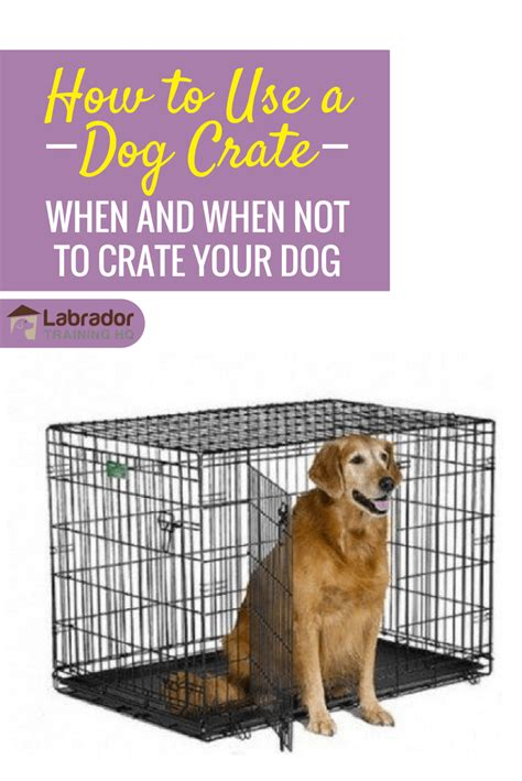 how to crate my puppy how to use a crate when and when not to crate a