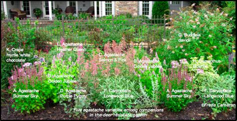 Landscape Design Zone 6 Defining Your Home Garden And Travel Agastache Garden Plan