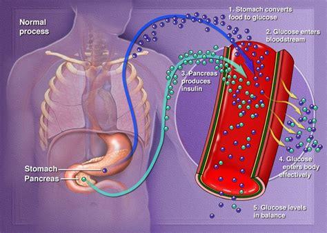 healthy fats blood sugar diabetes research centre