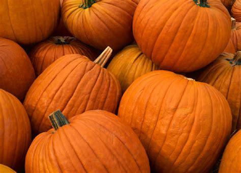 colored pumpkins seekingdecor pumpkin colored finds for october