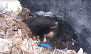 And East Found On Mixed Found In A Michigan Garbage Can Barely Holding On To Is Put To Sleep Daily Mail