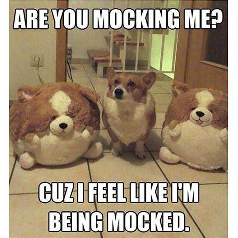 Adorable Animal Memes - 17 best ideas about animal memes on pinterest cute memes