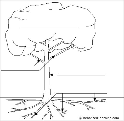labeled tree diagram ear and anatomy diagram ear free engine image for user
