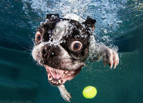 dogs in water grinning dogs in water chinadaily forum