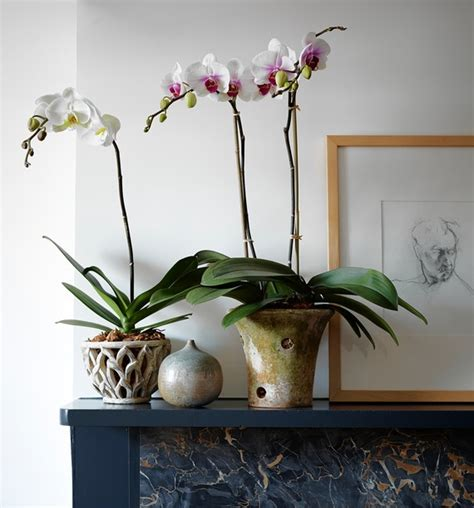 the best orchid pots wsj
