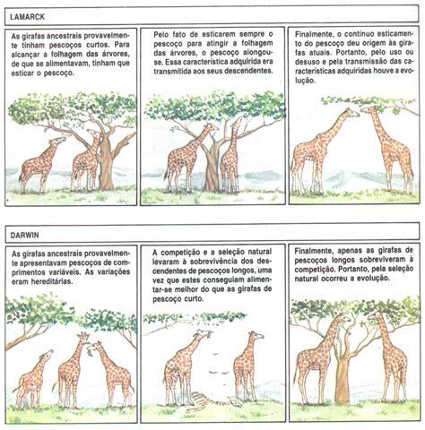 imagenes de las jirafas de darwin darwin x lamarck evid 234 ncias da evolu 231 227 o