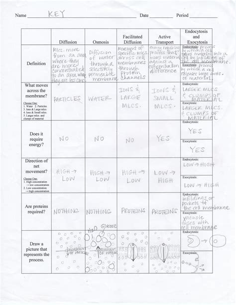Cell Cycle Worksheet Answers by Cellular Transport And The Cell Cycle Worksheet Answers