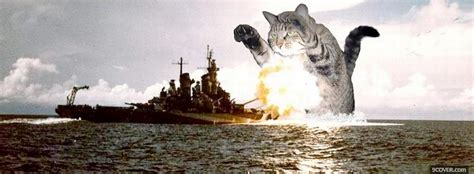 world cat boat cover cat destroying ship photo facebook cover