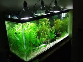 55 gallon fish tank light bulb 55 gallon lighting
