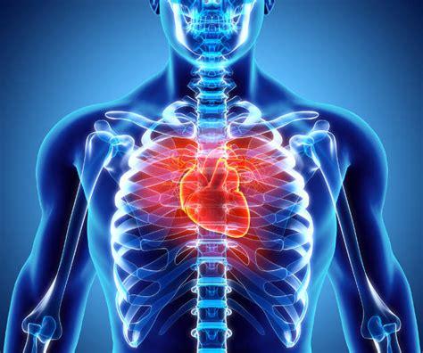 malattie cuore e dei vasi cuore funzionamento e malattie cardiache farmaco e cura