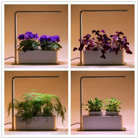 led grow lights for orchids orchids seedlings led grow light buy orchids seedlings