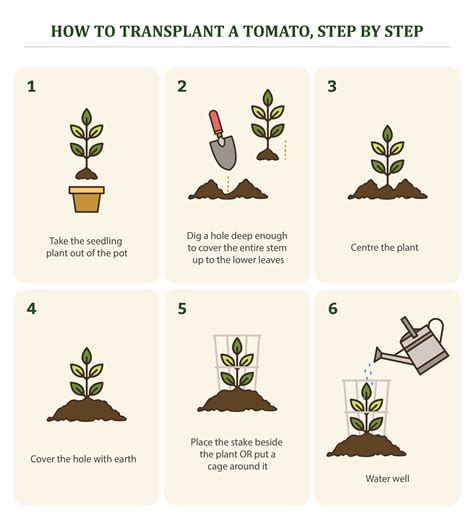 How To Plant A Flower Garden Step By Step How To Design A Flower Garden Step By Step How To Draw Flowers Step By Step Diy Tutorial How