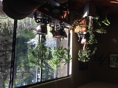 plants  lighting sierra news