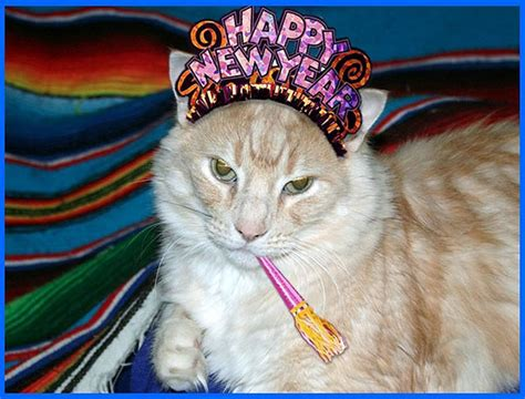 the year of the cat new year happy mew year 10 cats in new year s hats catster