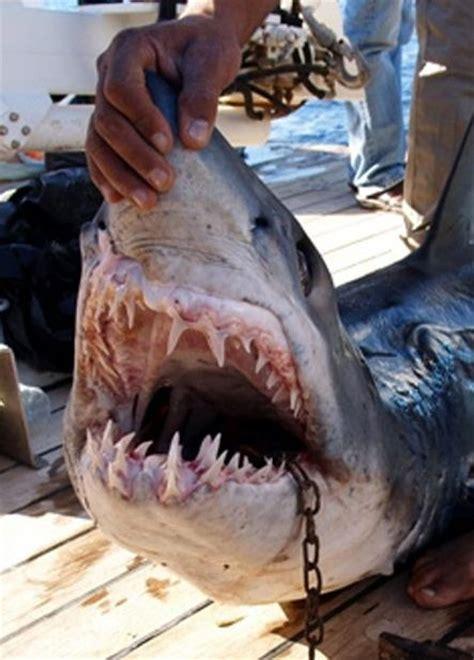 blue sexually graphic 埃及上演真实版 大白鲨 吃人事件图片 互动图片