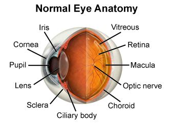 what part of the eye gives it color eye anatomy neartown neartown eye anatomy parts of the