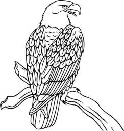 eagle coloring pages and charming collection of eagle coloring pages