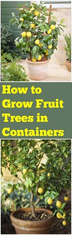 how to grow apple trees in backyard 1000 images about flowers gardens on pinterest