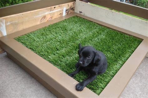 when to potty a puppy diy porch potty is the ultimate solution for city dogs or lazy pet owners photos