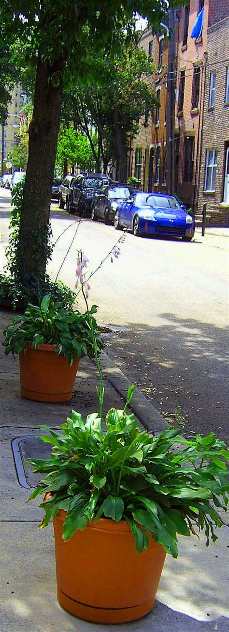 sidewalk planters and tree with base box plantings