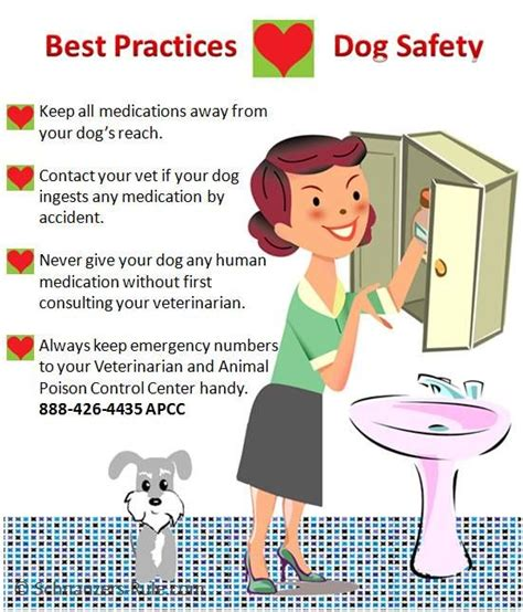 medicine safe for dogs 1000 images about vet approved human meds for pets on
