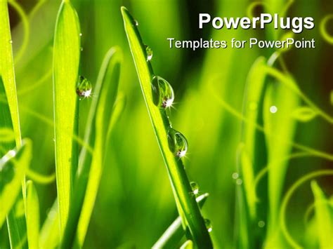 grass powerpoint template dew drop on a blade of grass powerpoint template
