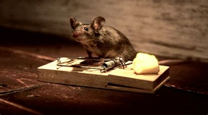 nolans cheddar mouse commercial nolan s cheddar helps a mouse cheat death adweek