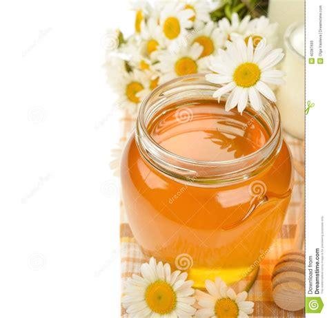 miele alimento miele e camomilla immagine stock immagine di alimento