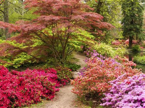 woodland garden ideas 25 best ideas about woodland garden on forest
