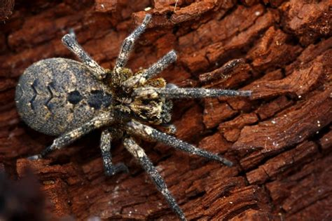 how to get rid of spiders and their irritating cobwebs