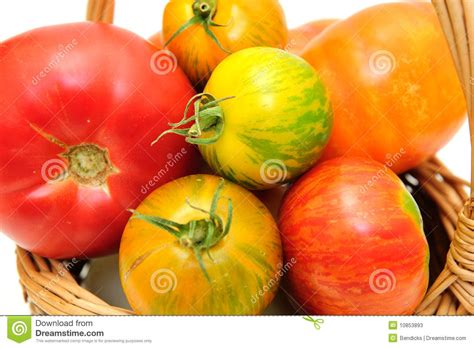 Tomat Multi Color colorful heirloom tomatoes stock photos image 10853893