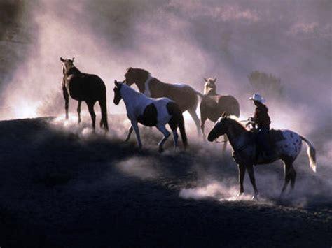 imagenes cowboy up cowboy up wallpaper wallpapersafari