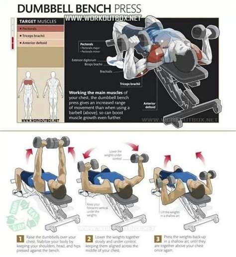 bench chest exercises to be strength and shape on pinterest