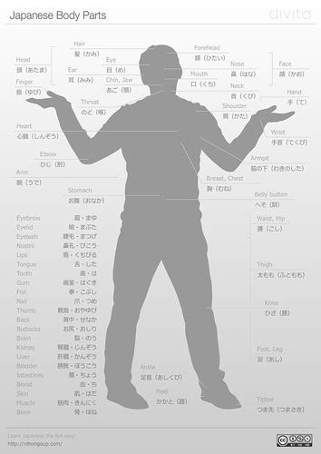 Japanese Body Parts Cheat Sheet   A Japanese body parts